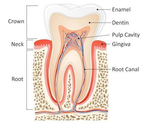 Root Canal Therapy Shell Cove
